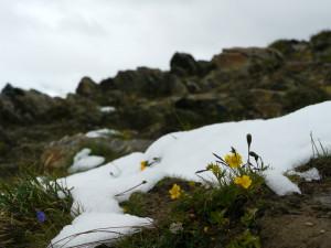 ローテンボーデン近くでの花と雪