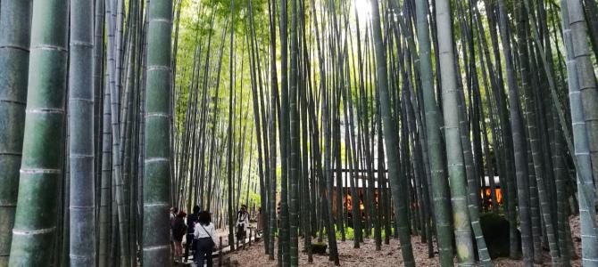 鎌倉その他の神社仏閣など巡り
