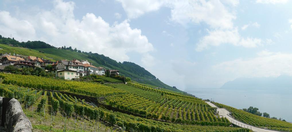 世界遺産ラヴォー葡萄畑(Lavaux Vineyard)