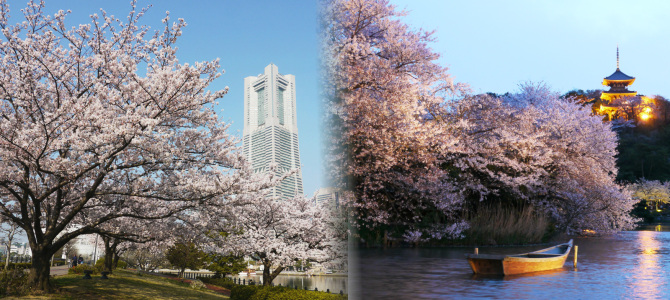 横浜お花見スポット(南西エリア編)
