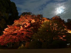 六義園_月と紅葉の大木
