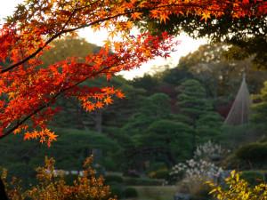 六義園_夕日に照らされる紅葉