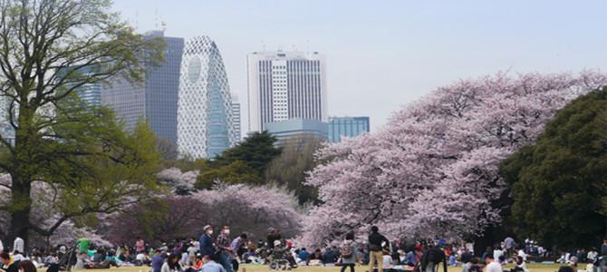 新宿御苑 桜・菊など