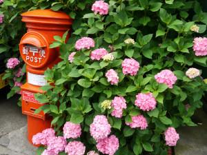 紫陽花と昔懐かしいポスト