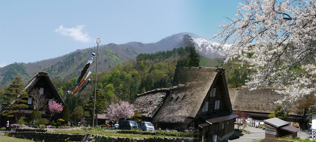 白川郷_鯉のぼりと山と家と桜