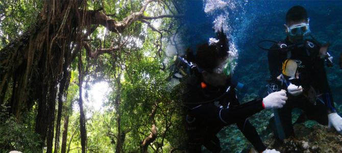 沖縄本島で自然と海を体感