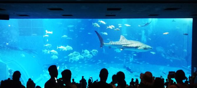 沖縄本島北部のブセナ・海洋博公園へ