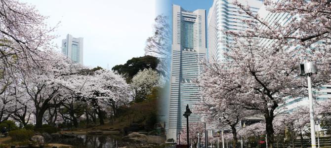 横浜お花見スポット(北東エリア編)