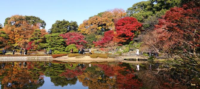 皇居・昭和記念公園の紅葉