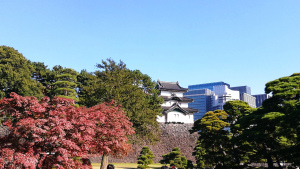 皇居と城跡と紅葉